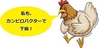 下痢をしている鶏