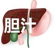 肝臓から胆汁分泌
