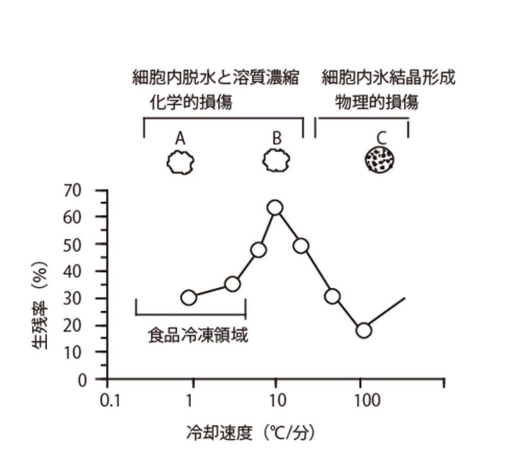 凍結温度帯と微生物の細胞損傷の状態の関係