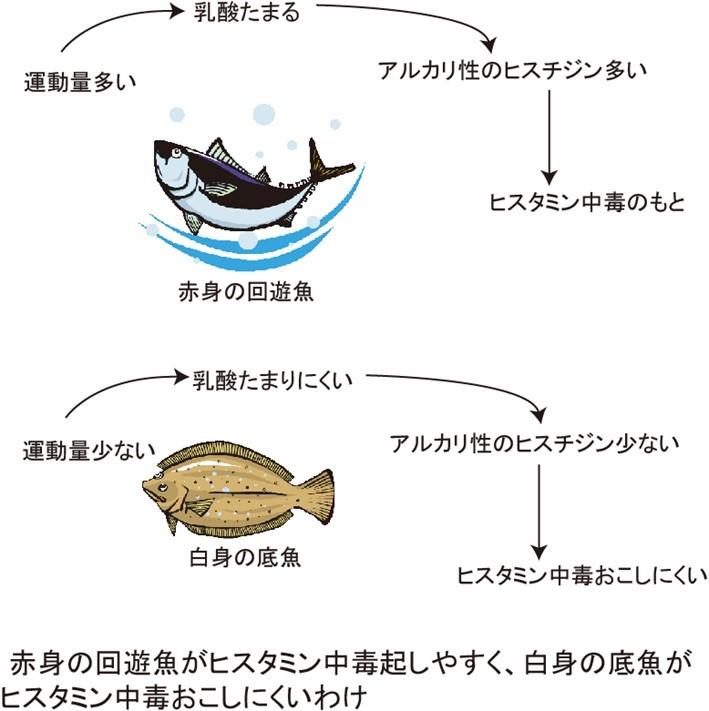 ヒスタミン食中毒になりやすい魚