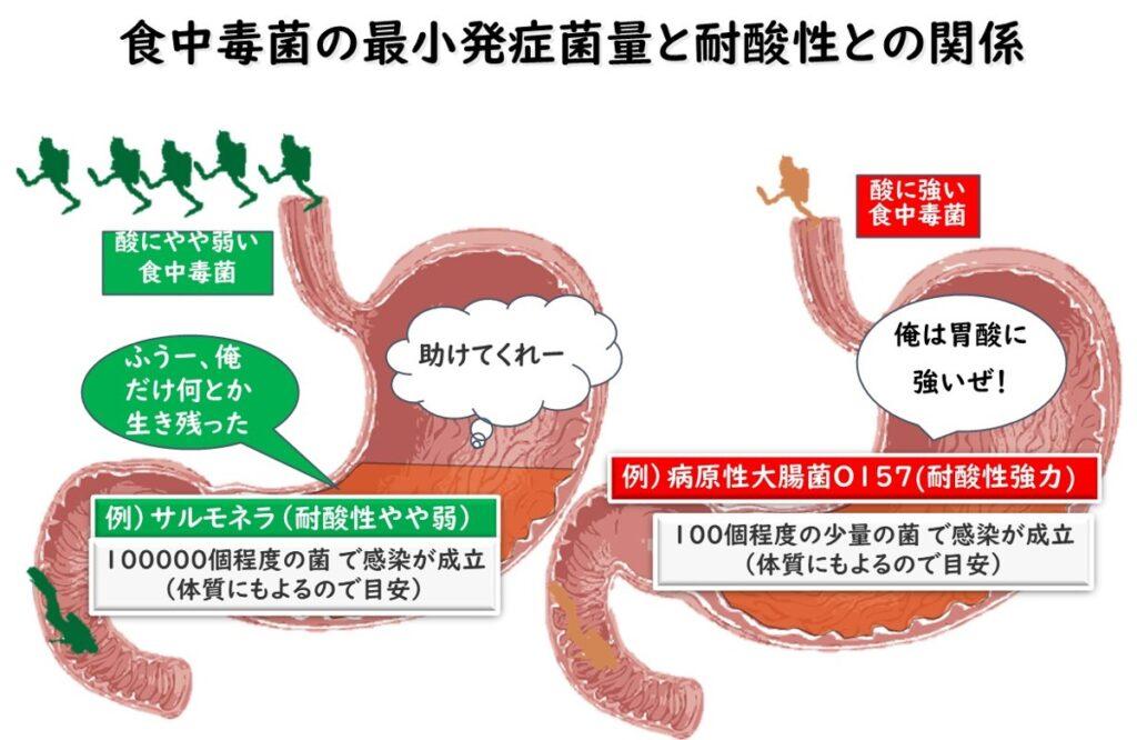 微生物の酸に対する強さの違いと胃酸での生存